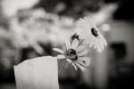 querformat-fotografie - Achim Katzberg - Hochzeiten - Die kleinen Dinge - ∞
