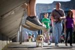 querformat-fotografie - Achim Katzberg - Street - Dogs - ALL★STAR