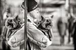 querformat-fotografie - Achim Katzberg - Street - Dogs - Schietwetter