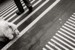 querformat-fotografie - Achim Katzberg - Street - Dogs - Zurich Streets #8