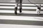 querformat-fotografie - Achim Katzberg - Street - Dogs - I amsterdam #13