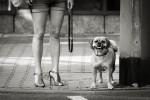 querformat-fotografie - Achim Katzberg - Street - Dogs - Street dog