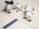 querformat-fotografie - Achim Katzberg - Street - Dogs - Bitte Abstand halten!