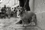 querformat-fotografie - Achim Katzberg - querformat-fotografie_Orte_Streets_of_Paris_2017-027