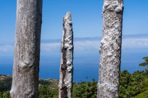 querformat-fotografie - Achim Katzberg - querformat-fotografie_Madeira-032